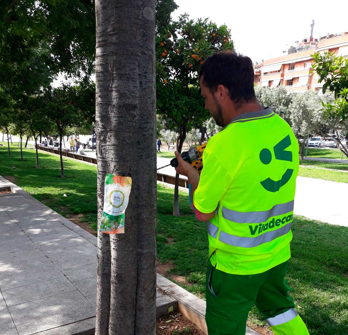 El Ayuntamiento de Viladecans trata sus árboles con problemas nutricionales