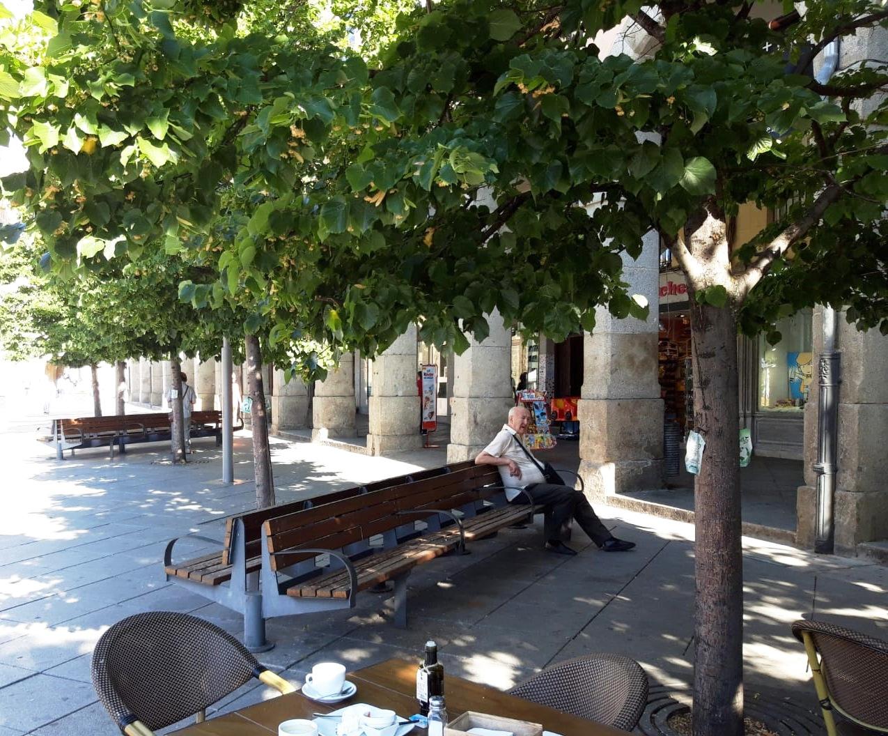 El Ayuntamiento de Ávila utiliza la inyección al tronco