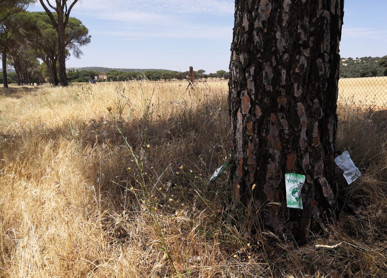 Tratamiento de endoterapia contra Tomicus en pinos