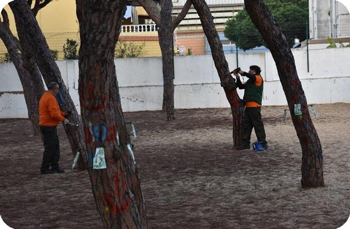Punta Umbría combate la procesionaria con endoterapia